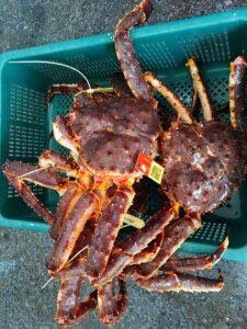 Cua king crab giá rẻ TPHCM